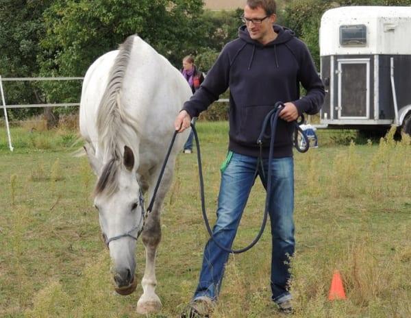 Führen mit Pferd - Das klappt noch nicht so ganz. Momentan macht Silverado noch, was er will. Noch!